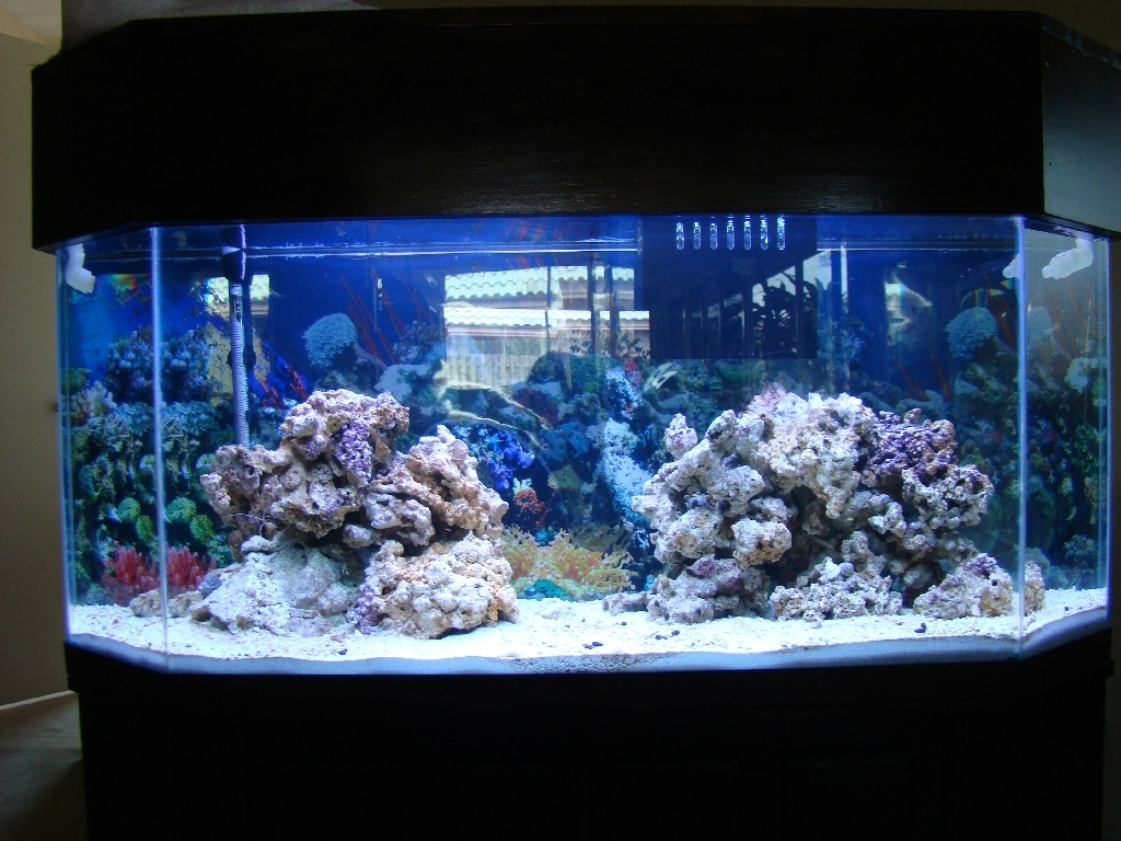 Saltwater aquarium 50 gallon salt water fish tank joy for 50 gallon fish tank