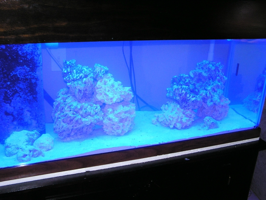 75 gallon saltwater tank 2011 for How many fish can be in a 20 gallon tank