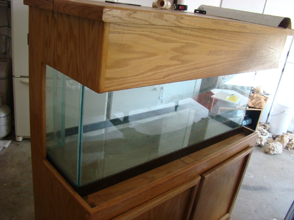 & 75 Gallon Saltwater Aquarium